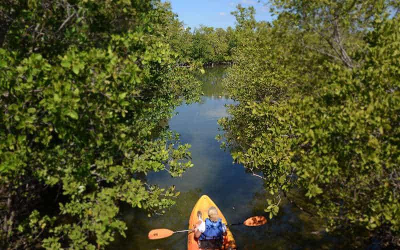 Oleta River | Kayaking In Florida