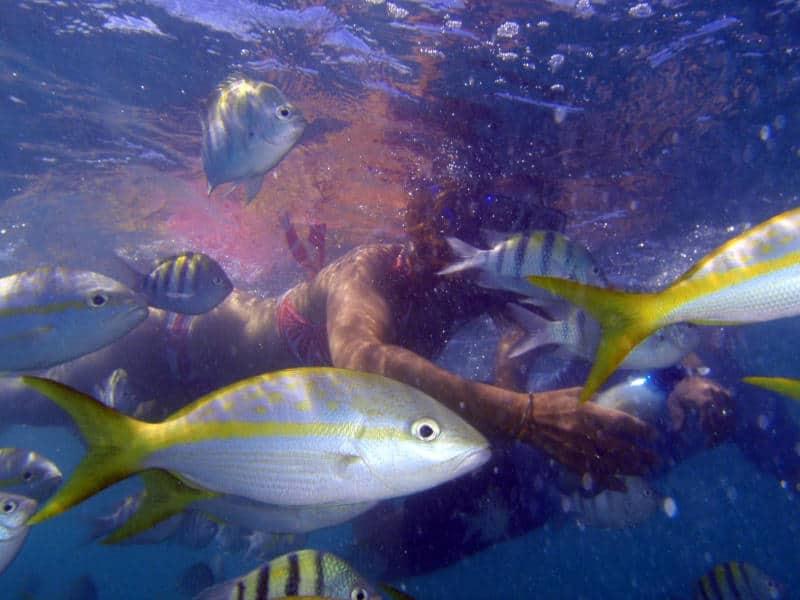 Best Places To Dive - Cuba